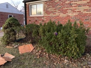 Free bushes in affton! for Sale in Affton, MO