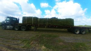 Sod for Sale in Port St. Lucie, FL
