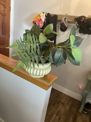 Fake plant for Sale in Oak Hills, CA