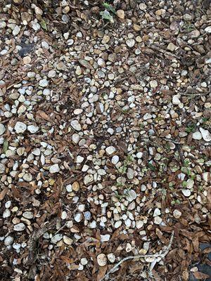 Free river rocks DeLand for Sale in DeLand, FL