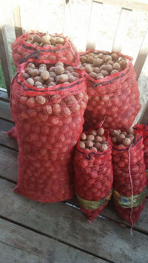 Chandler Walnuts 125 pounds for Sale in Fresno, CA