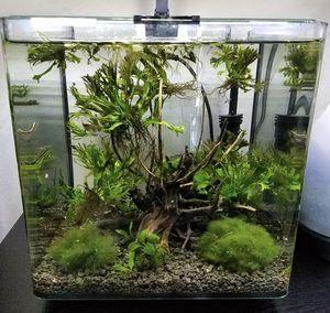 3 gallon Aquarium for Sale in Manassas, VA