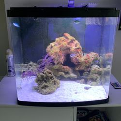 Fish Tank Cube Tank 30g for Sale in Fort Lauderdale,  FL