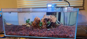 UNS 5 gal rimless fish tank for Sale in Houston, TX