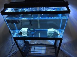 30g TALL COMPLETE FISH TANK WITH EXTRAS ONLY ONE YEAR OLD FOR SALE for Sale in Marlborough, MA