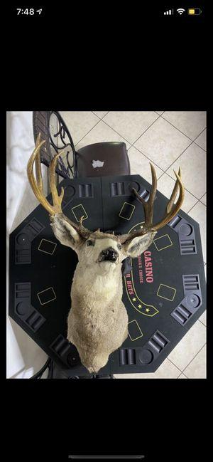 Deer Head Mount for Sale in Los Angeles, CA