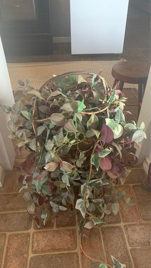Fake plant for Sale in Lindsay, CA