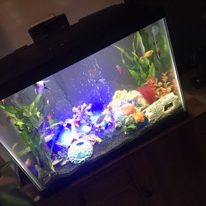 5 Fish for Sale in Vacaville, CA