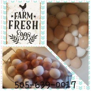 Organic frees Eggs for Sale in Los Lunas, NM