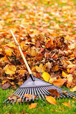 $30 to rake lawn , front and back. Will bag and remove leaves. In the West Babylon area but willing to travel a reasonable distance for Sale in Massapequa, NY