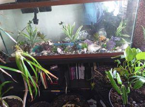 Fish Tank for Sale in North Chicago, IL