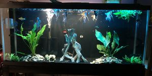55 gallons fish tank with stand, decoration and natural plants like you see in the picture. for Sale in Miami, FL