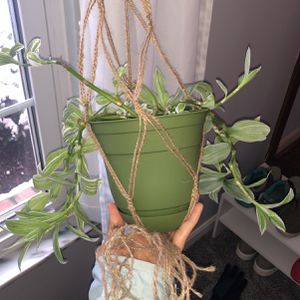 Macrame Plant Holder for Sale in Cincinnati, OH