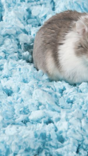 FREE hamster stuff for Sale in Sunrise, FL