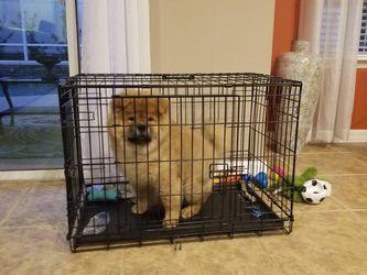 Dog Crate for Sale in DeLand,  FL