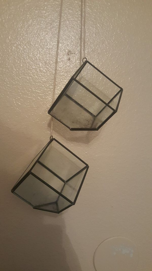 Hanging Glass Terrariums for Air Plant or Succulents