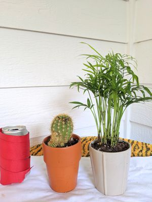 Pair #2 of Potted Cactus and Parlor Palm Plants for $10- Real Indoor House Plant for Sale in Auburn, WA
