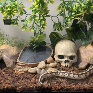 Ball Python Setup Tank for Sale in Hialeah, FL