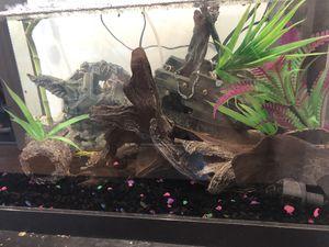 Fluval spec v fish tank for Sale in Orlando, FL