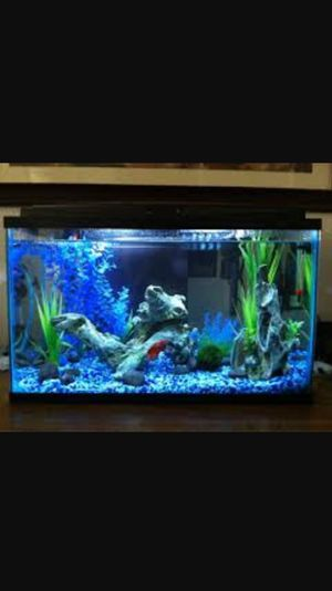 10 gallon auarium for Sale in Brookline, MA