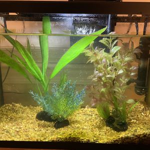 Fish Tank for Sale in Columbia, MD