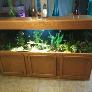 Fish Tank For Sale\Trade for Sale in Carmichael, CA