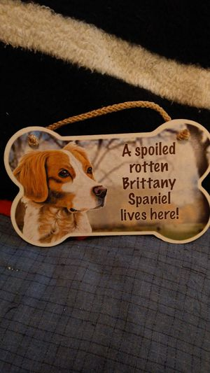 A spoiled rotten brittany spaniel for Sale in Lock Haven, PA