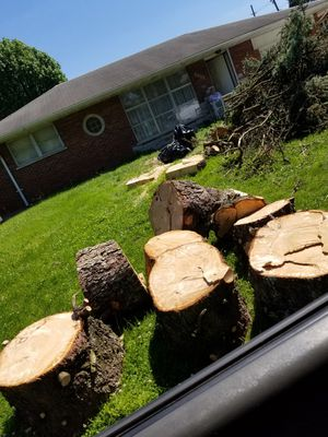 Free firewood-affton for Sale in St. Louis, MO
