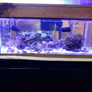Fish tank Salt Water for Sale in Irving, TX