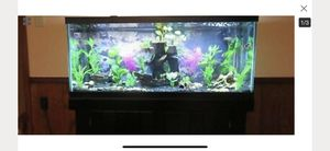 75 gallon fish tank and stand. for Sale in Pasco, WA