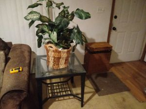Plant and table for Sale in Fenton, MO