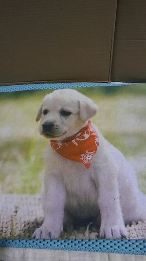 Puppy mat for Sale in San Jacinto, CA