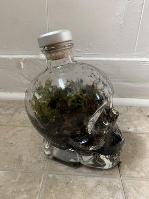 Skull terrarium for Sale in Richmond, VA
