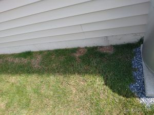 Grown grass for free for Sale in PA, US