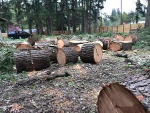 Limbs off, fresh lots of cut lumber for Sale in Federal Way, WA