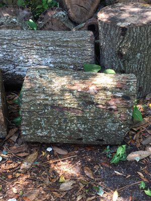 Solid oak tree stumps for Sale in Longwood, FL