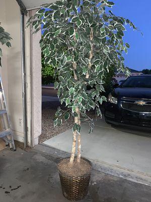 Fake tree for Sale in Avondale, AZ