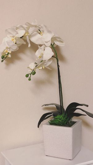 Home Goods Decorative Floral Plant for Sale in Clovis, CA