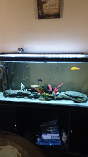 120 gal fish tank for Sale in Bakersfield, CA