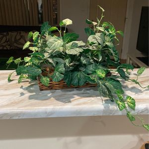 Fake Plant for Sale in Wheeling, IL
