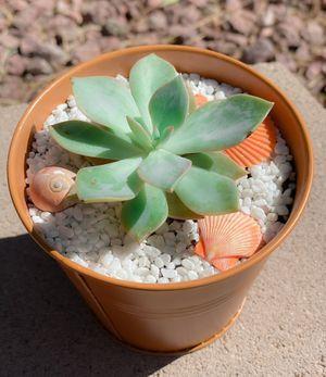 Assorted Succulent Arrangement for Sale in Las Vegas, NV