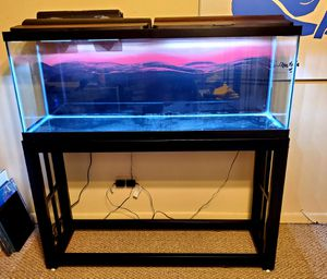 55 gallon fish tank with stand and filter OBO for Sale in Chicago Ridge, IL