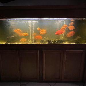 Fish Tank/Aquarium for Sale in Hialeah, FL