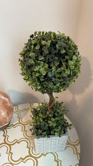 Plant for Sale in Atlanta, GA