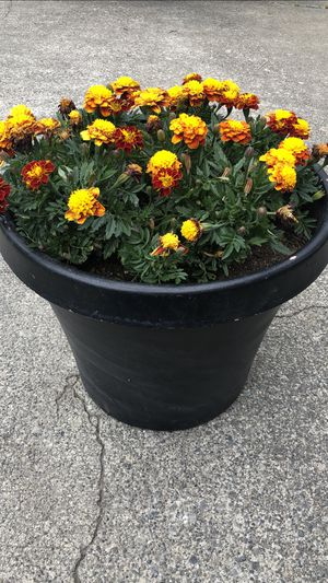 Beautiful planter with Flowers for Sale in Federal Way, WA