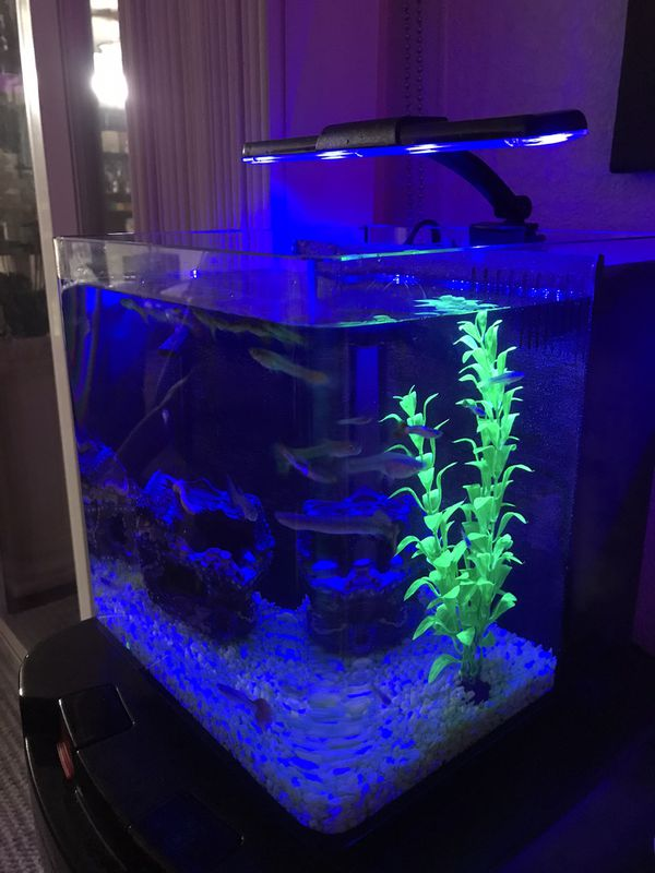 3.7 Gallons Deluxe Fish Aquarium with fishes and filter