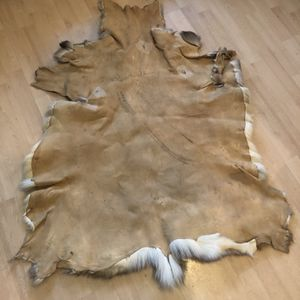 Whitetail Deer Hide for Sale in Spring, TX