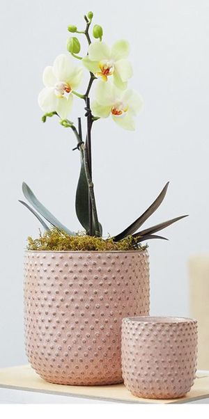 """Pink Ceramic Flower Pot - 5.5"""" Tall for Sale in Los Angeles, CA"""