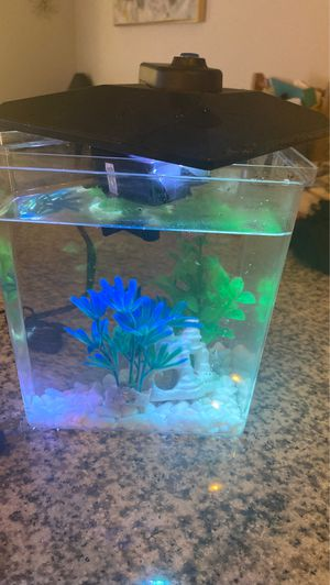 Small fish tank with filter. for Sale in Pflugerville, TX