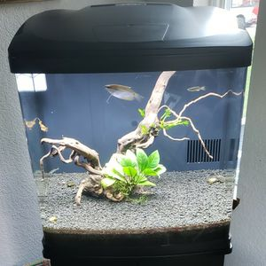 BioCube 32 Full Set Up for Sale in Snohomish, WA
